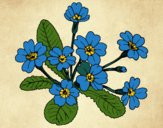 Coloring page Primula painted byNerak